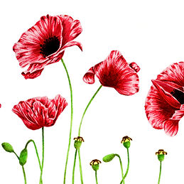 Poppies -1.jpg