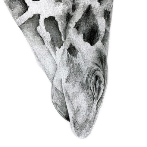 Giraffe - 9 x 12 -0.5.jpg
