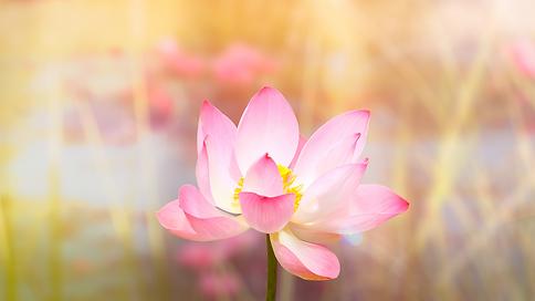 Lotus Know Thyself