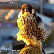 © CPP 2020 webcam (24).jpg