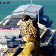 © CPP 2020 webcam (27).jpg
