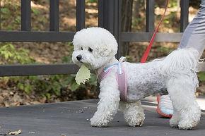 pet-dogs-3704090_640.jpg