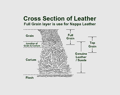 cross section of nappa leather 5.jpg