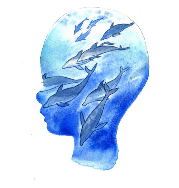 Dolphin portrait