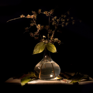 Mauro Davoli, Fiori in vaso e mosche