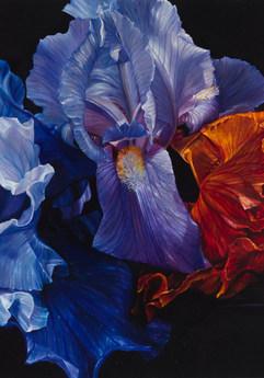 Lars Reiffers, Fleur de lys