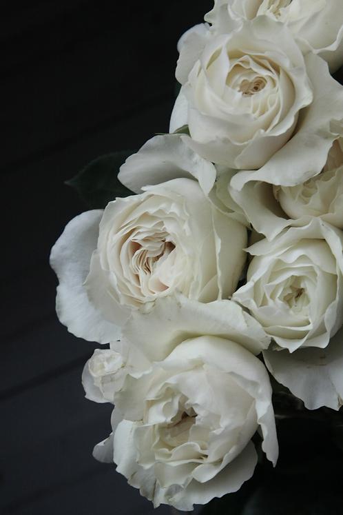 Премиальная пионовидная роза