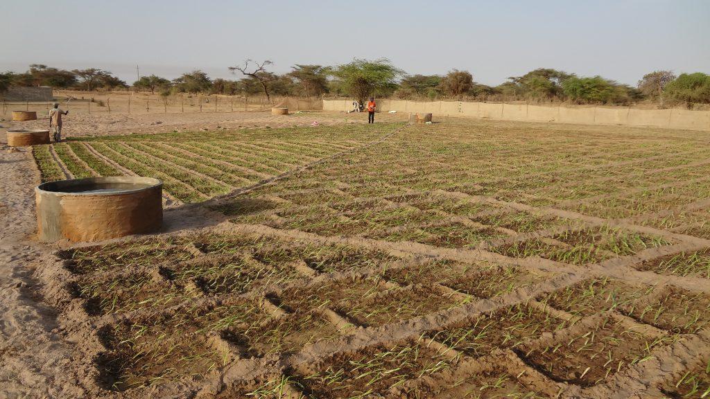 micro-financed small plot farming