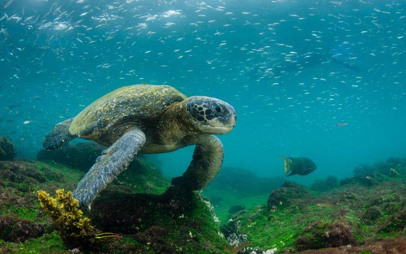 Tortuga marina de Galápagos