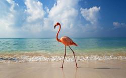 Galapagos-flamenco-animal