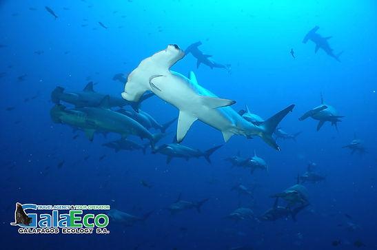 Expeimenta Galapagos haciendo buceo