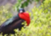 Seymour está al norte de Baltra y tienes aves maravillosas y unas playas muy hemosas