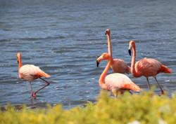 Isla Floreana con flamingos