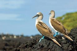 1-baltra-silversea-galapagos-cruise-blue
