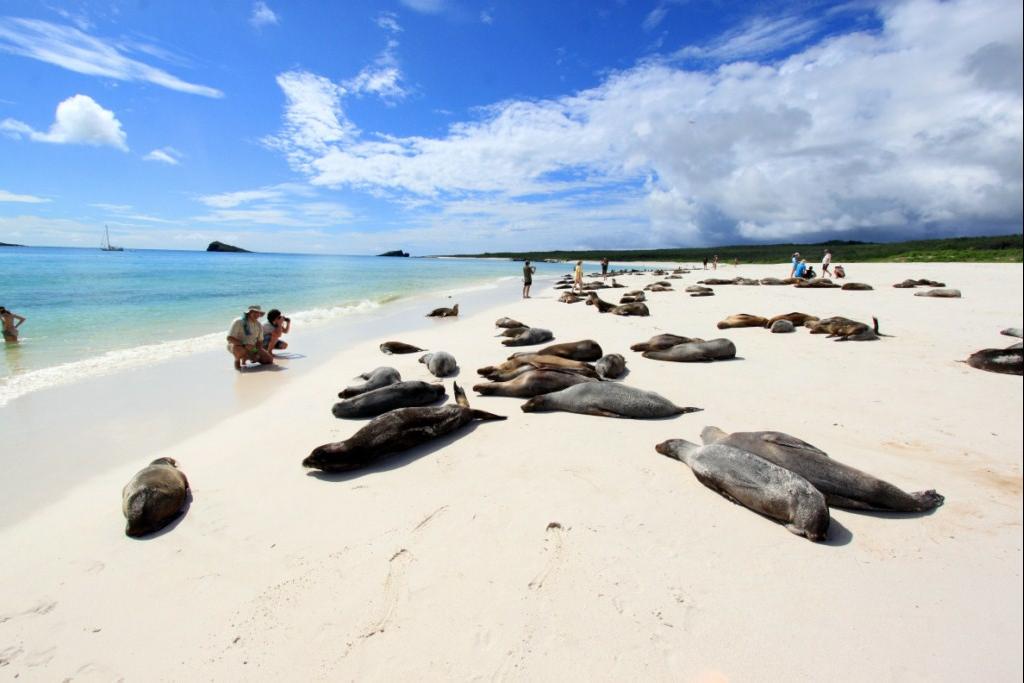 Galaeco_Galapagos Land Tour