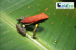 Tours a la selva ecuatoriana