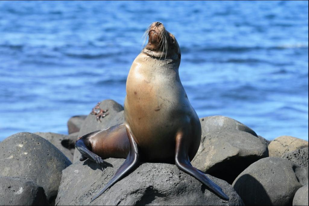 Galaeco-Galapagos-LoboMarino