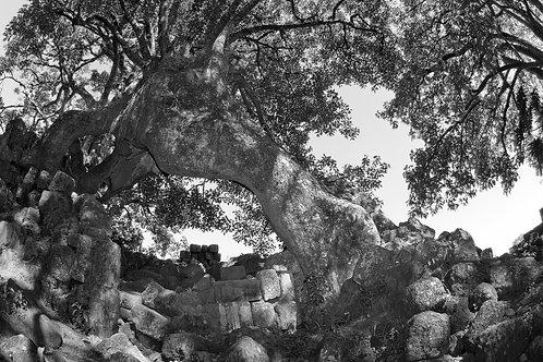 Eneida Serrano - Árvore e tempo