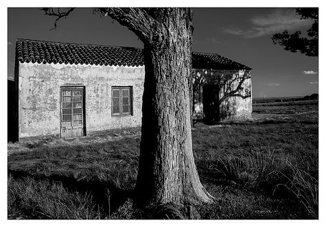 Eurico Salis - Pampa
