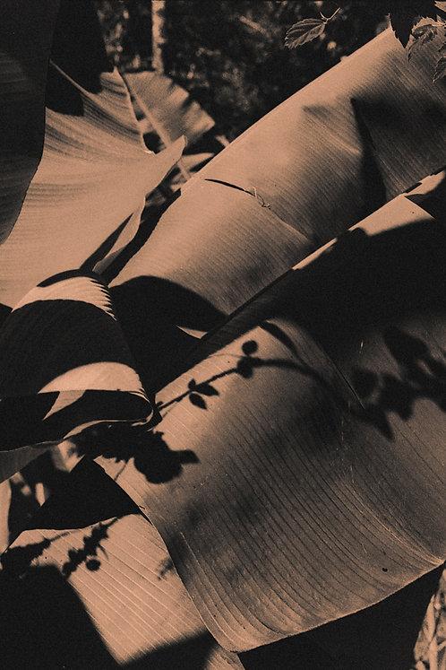 Bárbara Bragato - O vento sopra onde o sol faz morada