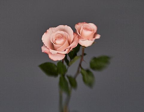 Tiago Farina - Blur roses