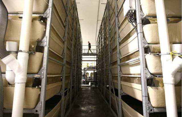 "Calgary Herald: ""Shrimp farm flourishes in land-locked Strathmore"""