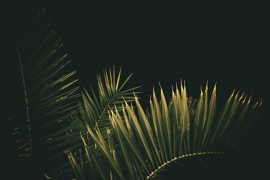 magnus-lunay-hukMR88Ni0I-unsplash_edited