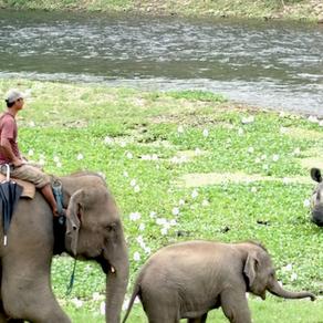 Friendly Elephant - A Story
