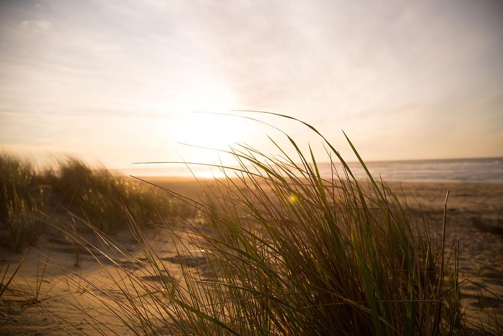 Life-of-Pix-free-stock-photos-beach-grass-ocean-jordanmcqueen.jpg