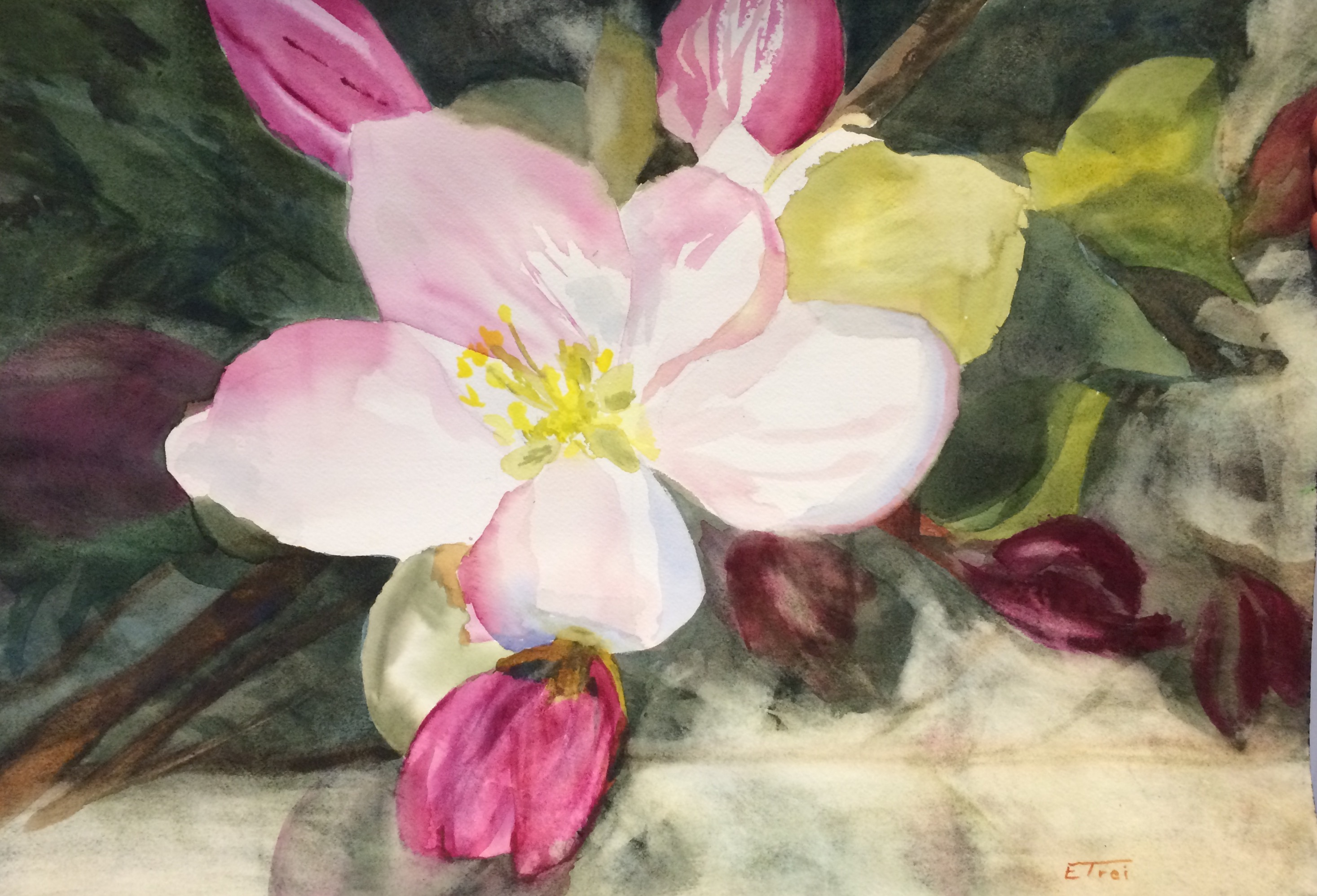 Apple Blossom Time - watercolor