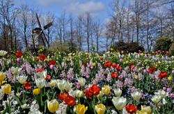 Keukenhof Gardens, Holland II-