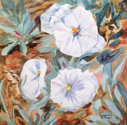 Desert Rose - watercolor