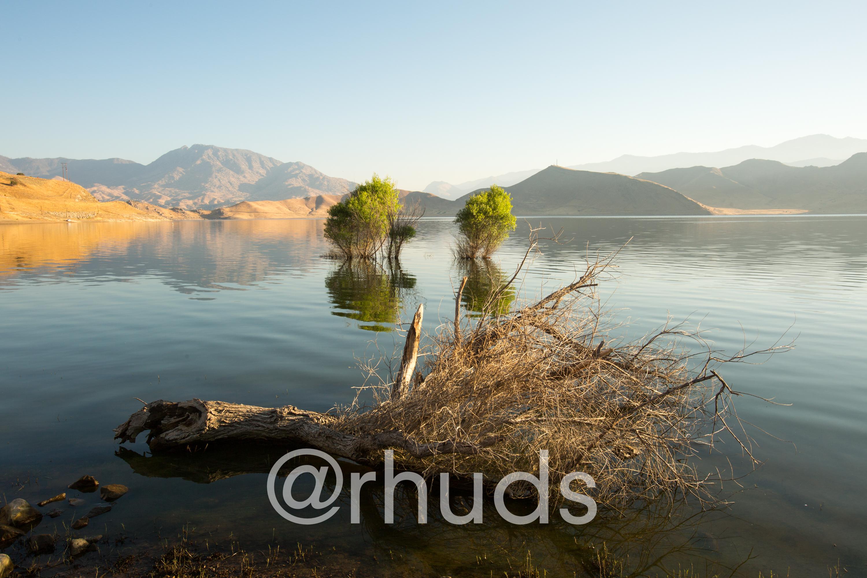 Lake Issabella dead tree