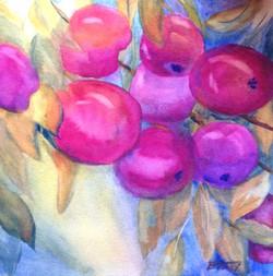 Fall Apples - watercolor