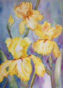 Yellow Iris My Favorite - watercolor