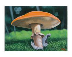 mushroom_no_02_8x10