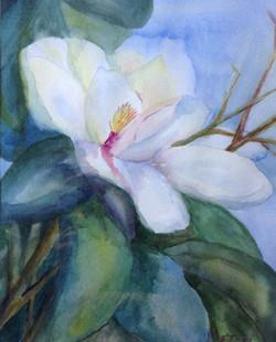 Magnolia Richness - watercolor