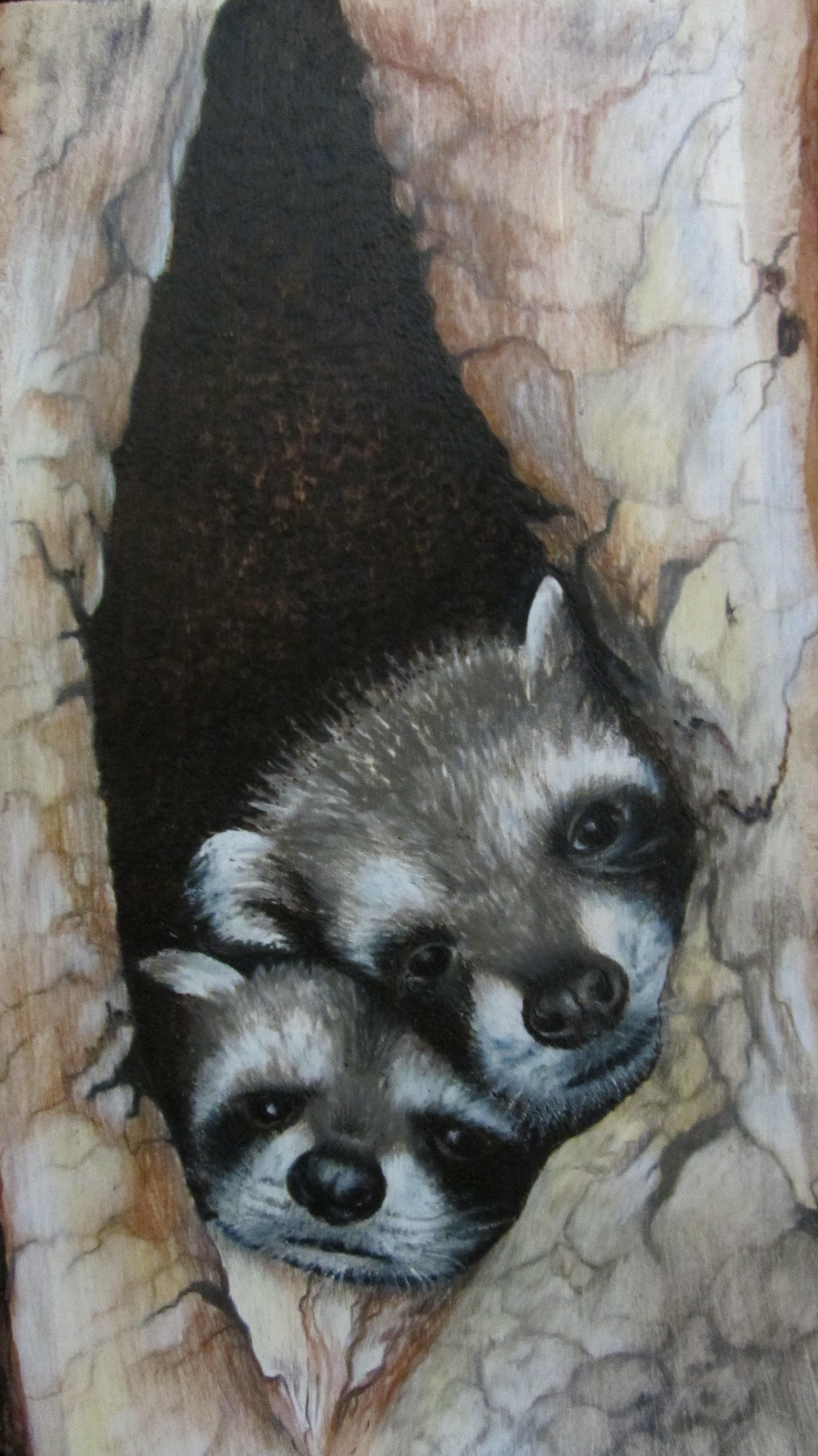 raccoons (2)
