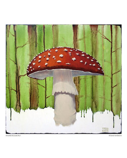 mushroom_aminita_8x10
