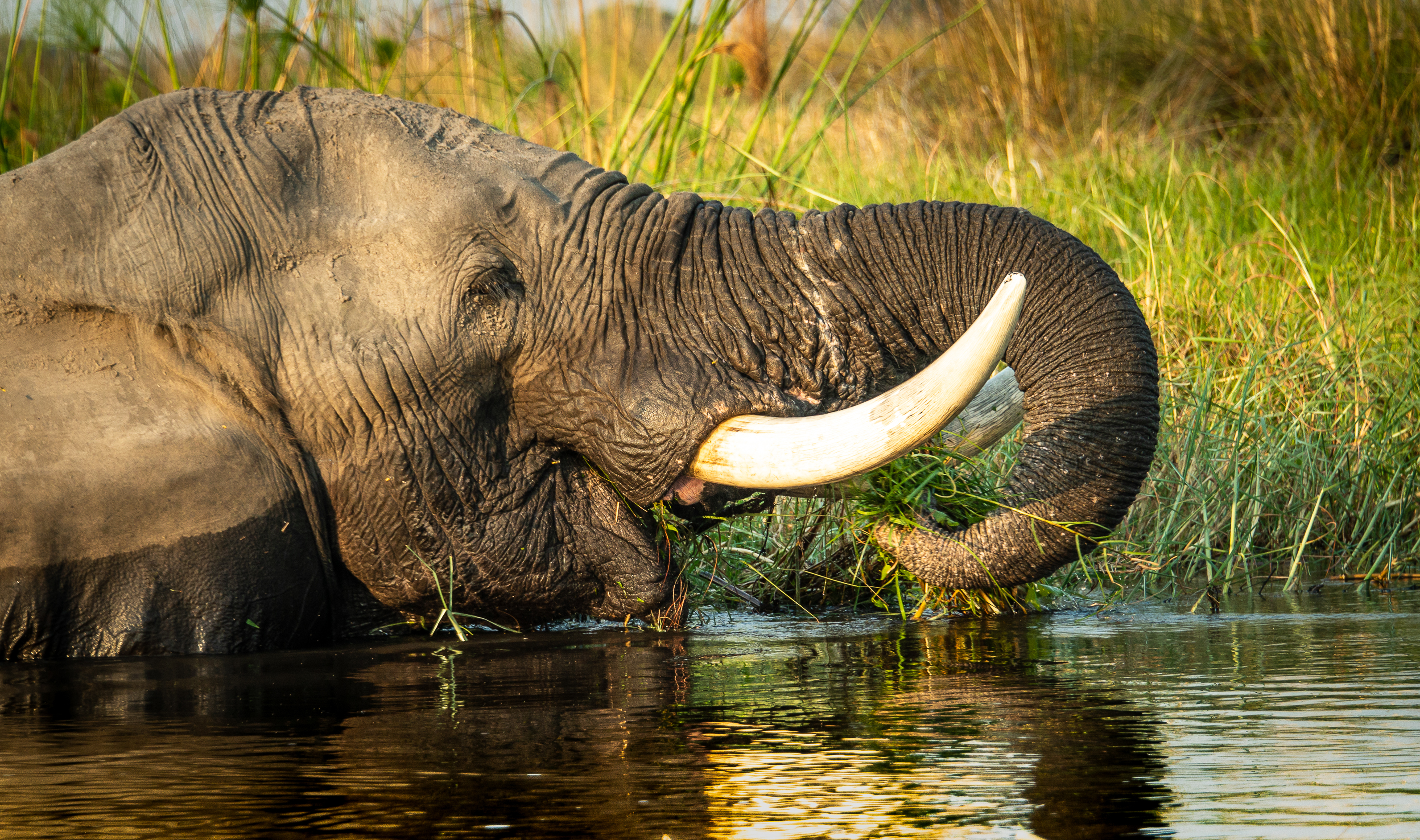 Elephant Lounging in River-3698