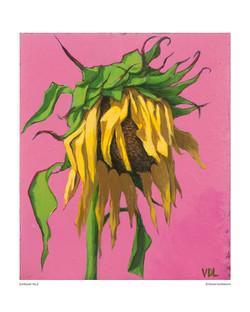 sunflower_no_02_8x10