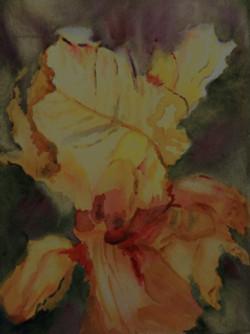Eye of God Iris - watercolor