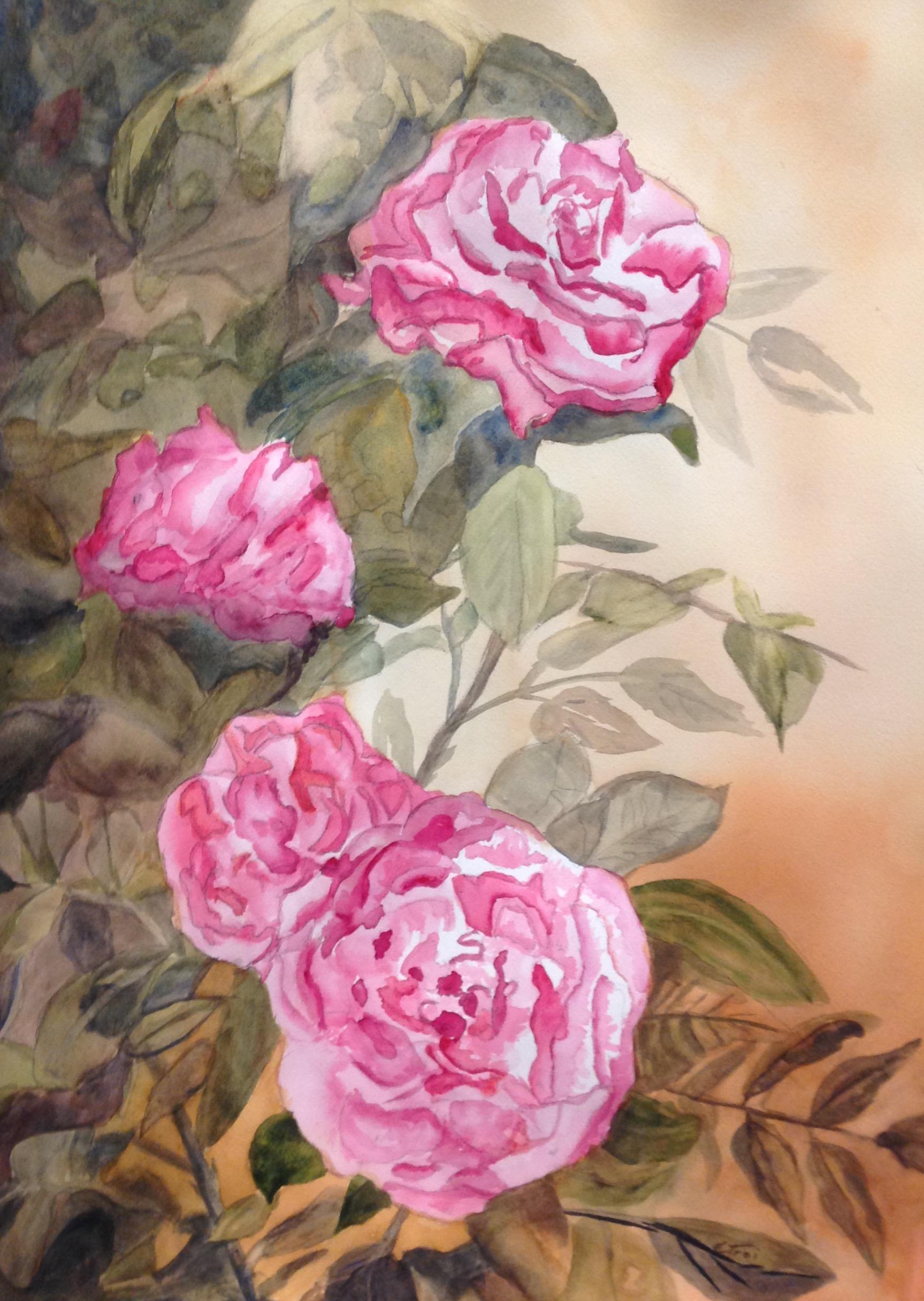 Roses, Pink Wonders - watercolor