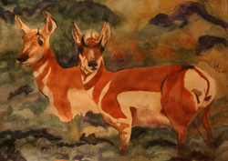 Antelope's Sunset - watercolor