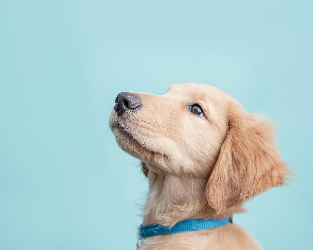 Dog photography studio in Portland, Maine