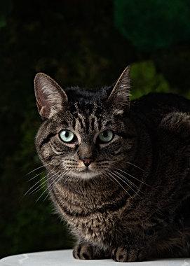 Cat portraits in Maine