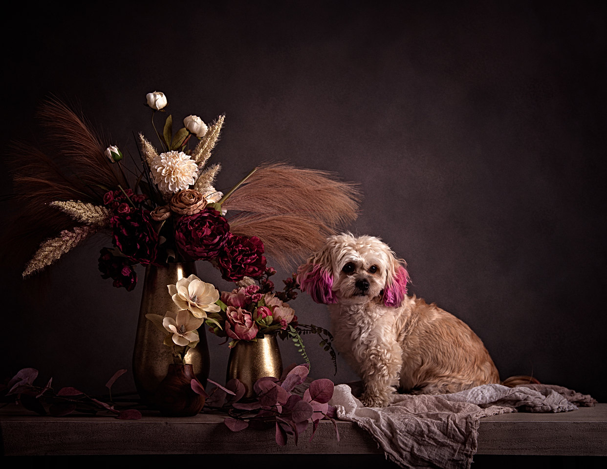Boston pet photographer