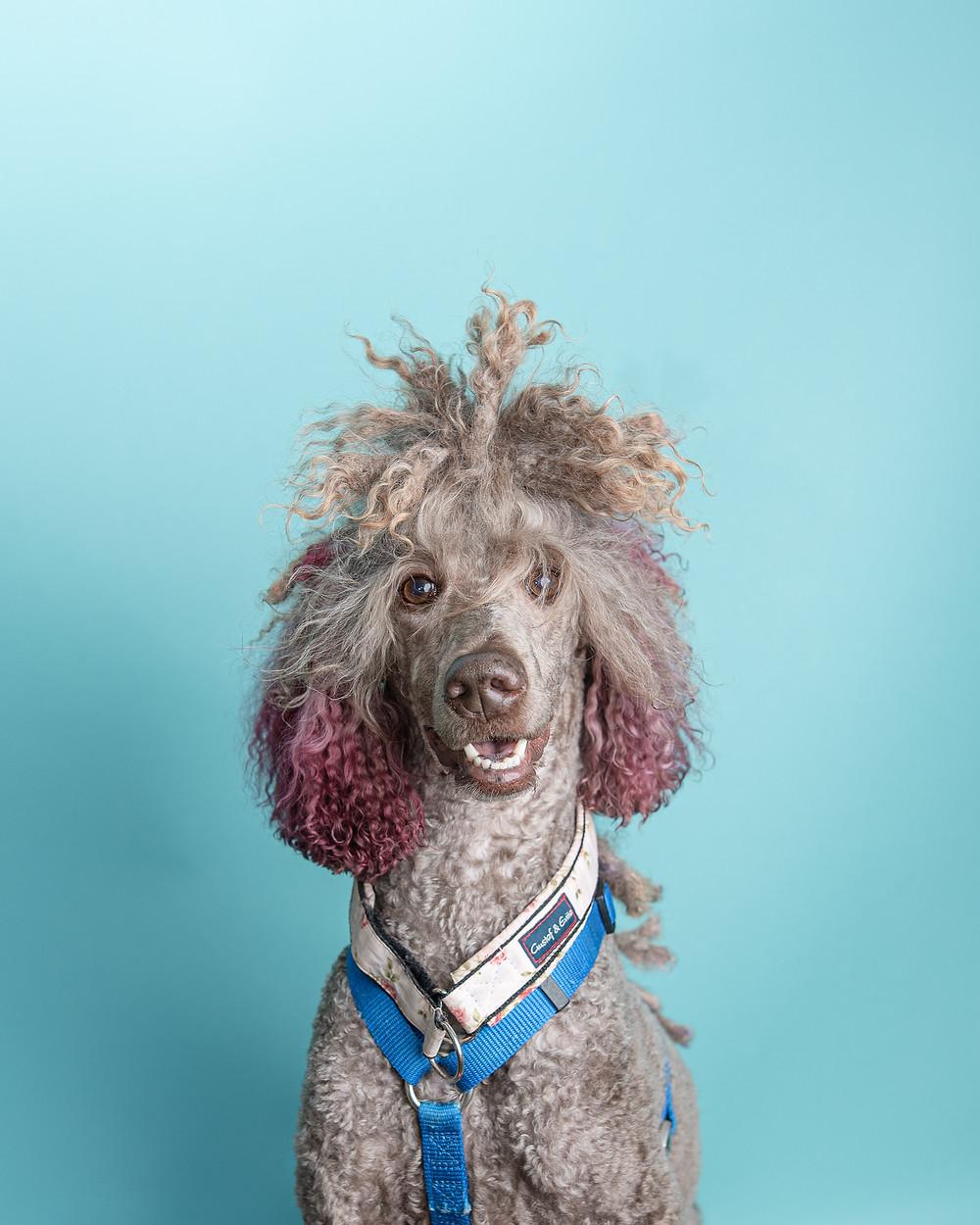Kennebunkport dog photographer