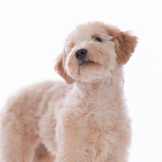 Maine Dog Photographer -4.jpg