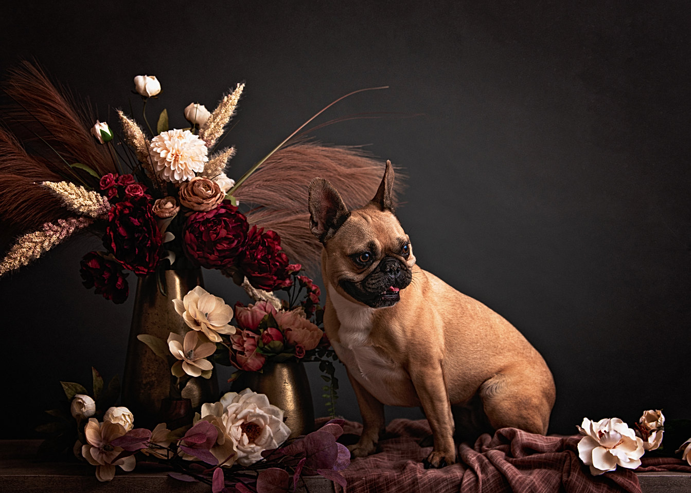 fine art pet portraits in new england